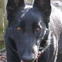 Adopt A Pet :: Juno (Special Needs) - Kansas City, MO