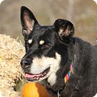 Husky Mix Dog for adoption in Marietta, Ohio - Zoey (Spayed)