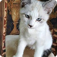 Adopt A Pet :: Ricky - Bentonville, AR