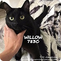 Adopt A Pet :: Willow - Spring, TX