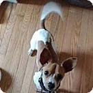Adopt A Pet :: Coque