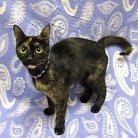 Adopt A Pet :: RAISIN - Lexington, NC