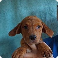 Adopt A Pet :: Aruba - Oviedo, FL