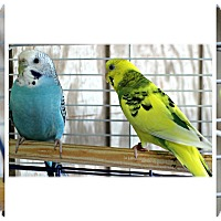 Adopt A Pet :: Ralph & Fred - Forked River, NJ