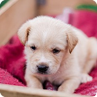 Adopt A Pet :: Jackie $250 - Seneca, SC