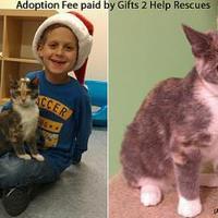Adopt A Pet :: Pastel - Greensboro, NC