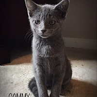 Adopt A Pet :: Cammy - Nashville, TN