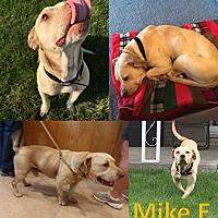 Adopt A Pet :: Mike E - Flint, MI