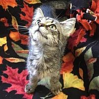 Adopt A Pet :: Jane - Harrisville, WV