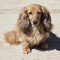 Adopt A Pet :: Elizabeth - Anaheim, CA