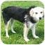 Photo 4 - Collie/German Shepherd Dog Mix Dog for adoption in Latrobe, Pennsylvania - Gordon