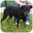 Photo 2 - Rottweiler Mix Dog for adoption in Somerset, Pennsylvania - Rex