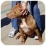 Photo 4 - American Pit Bull Terrier Mix Dog for adoption in Berkeley, California - Dina