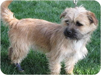 Terrier (Unknown Type, Small) Mix Dog for adoption in Nuevo, California - CHARLIE