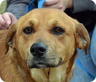 Terrier (Unknown Type, Medium) Mix Dog for adoption in Searcy, Arkansas - Bella