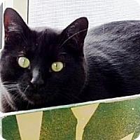 Adopt A Pet :: Frank - Belleville, MI