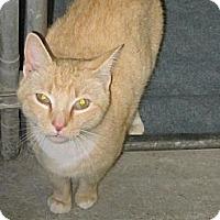 Adopt A Pet :: Penny - Southbury, CT