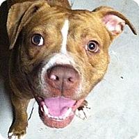 Adopt A Pet :: Piper **COURTESY POST** - Hadley, MI