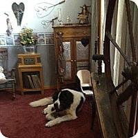 Adopt A Pet :: Max - Dandridge, TN