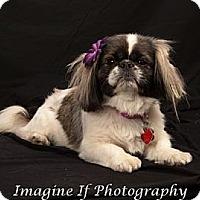 Adopt A Pet :: Emily - Tyler, TX