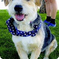 Adopt A Pet :: Rascal companion - Sacramento, CA