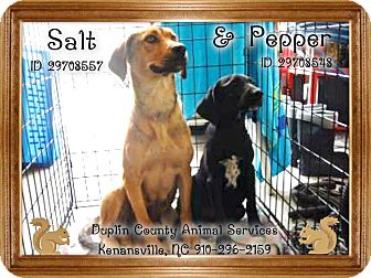 Retriever (Unknown Type) Mix Dog for adoption in Jacksonville, North Carolina - Pepper