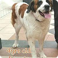 Adopt A Pet :: Missy - Austin, TX