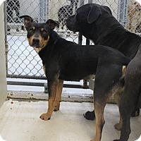 Adopt A Pet :: A12 Nancy - Odessa, TX