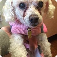 Adopt A Pet :: Lita - Oak Ridge, NJ