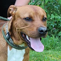 Adopt A Pet :: Opie - Hillsdale, IN