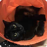 Adopt A Pet :: Parker - At Adoption Center - Frankfort, IL