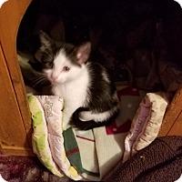 Adopt A Pet :: Twix - Princeton, MN