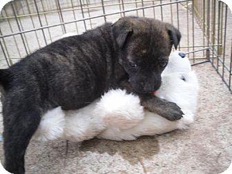 Terrier (Unknown Type, Medium) Mix Puppy for adoption in Guthrie, Oklahoma - Josie