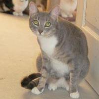 Adopt A Pet :: Blinkin - Enterprise, AL
