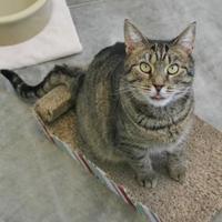 Adopt A Pet :: Taiga - Heath, OH