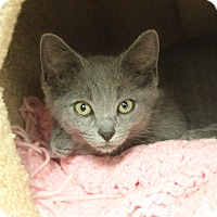 Adopt A Pet :: Steely Dan - Naperville, IL