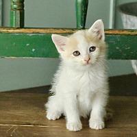 Adopt A Pet :: Lilly - San Antonio, TX