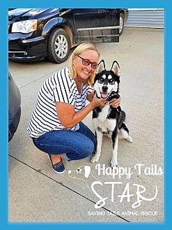Husky Dog for adoption in Northville, Michigan - Koda ADOPTED