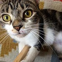 Adopt A Pet :: Ivy - Mount Laurel, NJ
