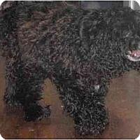 Adopt A Pet :: Penny Lane - Madison, WI