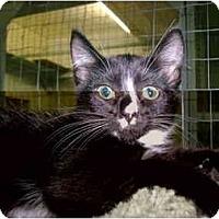Adopt A Pet :: Missy - Mission, BC