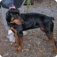 Adopt A Pet :: Willow - latrobe, PA