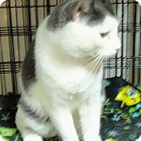 Adopt A Pet :: Chance - Catasauqua, PA