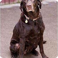Adopt A Pet :: Ernie - Portland, OR