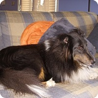 Adopt A Pet :: Jake - La Habra, CA