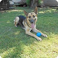 Adopt A Pet :: Rusty. Canine Good Citizen - Phoenix, AZ