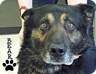 German Shepherd Dog Dog for adoption in Defiance, Ohio - Bear
