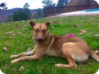 Shepherd (Unknown Type)/Hound (Unknown Type) Mix Dog for adoption in Glastonbury, Connecticut - CHEETO