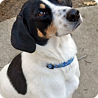 Adopt A Pet :: Nixon - in Maine - kennebunkport, ME