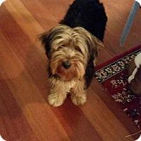 Adopt A Pet :: Ralley-URGENT - Providence, RI